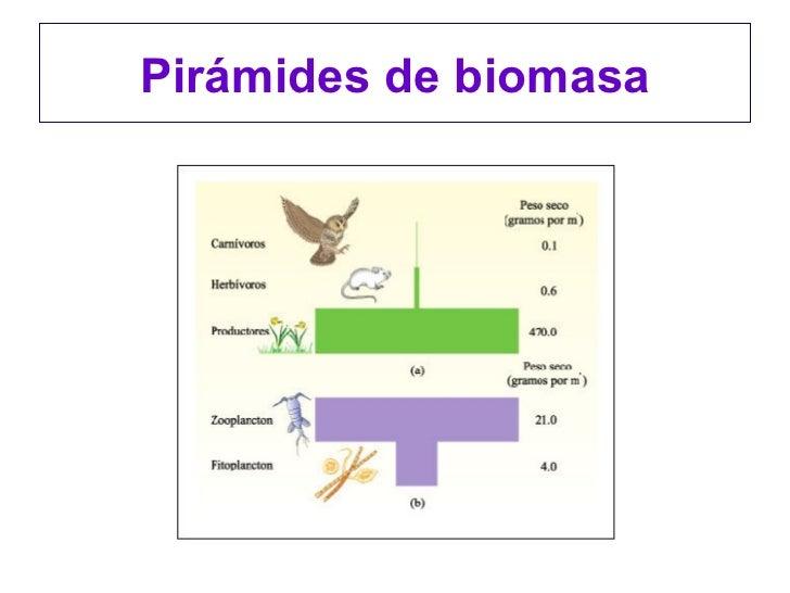 Energia de la biomasa yahoo dating 2