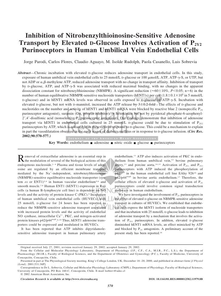 Inhibition of Nitrobenzylthioinosine-Sensitive Adenosine Transport by Elevated D-Glucose Involves Activation of P2Y2  Puri...