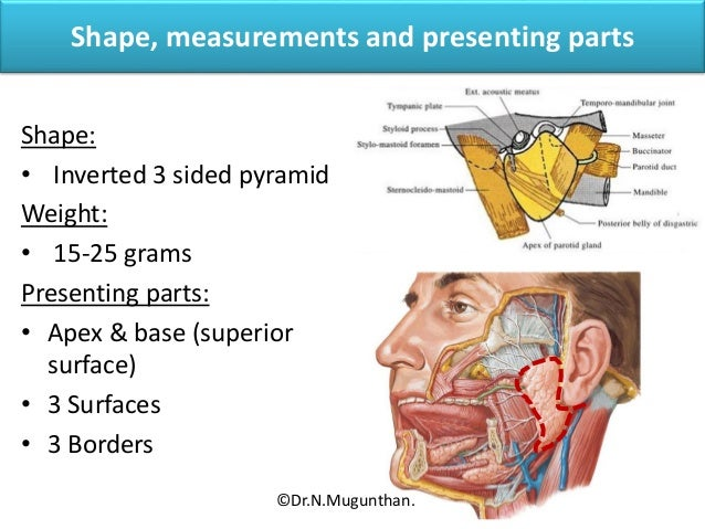 Parotid Gland Lecture By Drngunthan