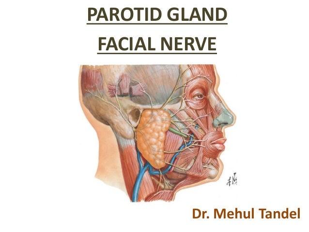 Parotidectomy and facial