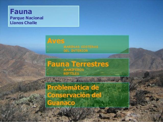 Aves • MARINAS COSTERAS • DEL INTERIOR Fauna Parque Nacional Llanos Challe Fauna Terrestres • MAMIFEROS • REPTILES Problem...