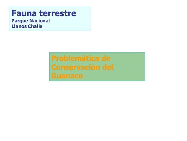Fauna terrestre Parque Nacional Llanos Challe Problemática de Conservación del Guanaco