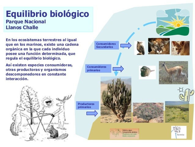 En los ecosistemas terrestres al igual que en los marinos, existe una cadena orgánica en la que cada individuo posee una f...