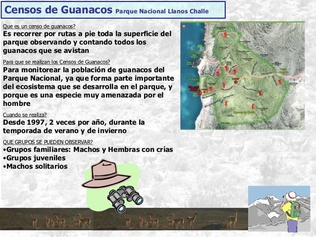 Censos de Guanacos Parque Nacional Llanos Challe Que es un censo de guanacos? Es recorrer por rutas a pie toda la superfic...