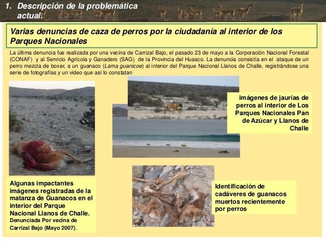 Varias denuncias de caza de perros por la ciudadanía al interior de los Parques Nacionales Algunas impactantes imágenes re...