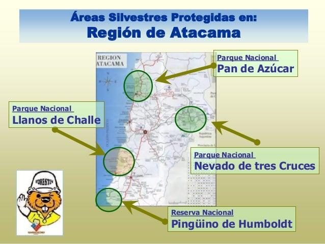 Áreas Silvestres Protegidas en: Región de Atacama Parque Nacional Pan de Azúcar Parque Nacional Llanos de Challe Parque Na...