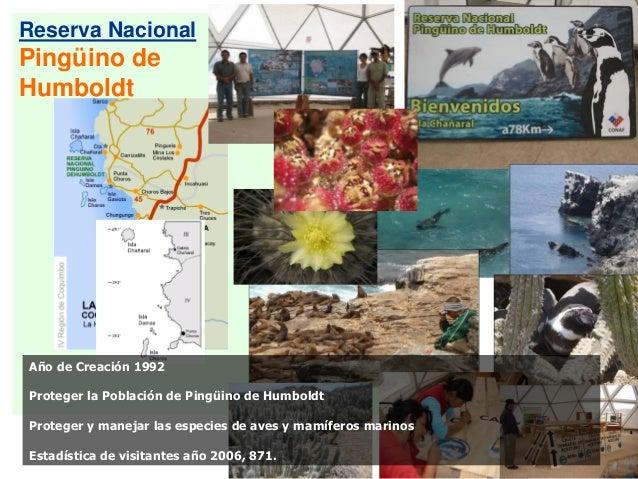Reserva Nacional Pingüino de Humboldt Año de Creación 1992 Proteger la Población de Pingüino de Humboldt Proteger y maneja...