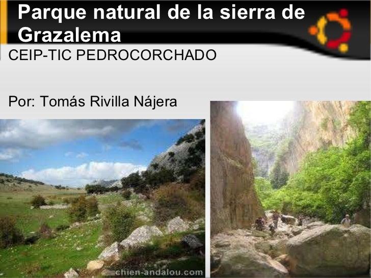 Parque natural de la sierra de Grazalema <ul><li>CEIP-TIC PEDROCORCHADO </li></ul>Por: Tomás Rivilla Nájera