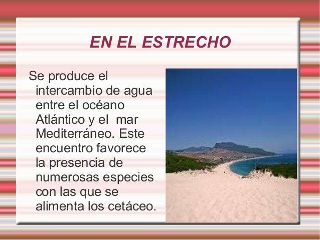 EN EL ESTRECHO Se produce el intercambio de agua entre el océano Atlántico y el mar Mediterráneo. Este encuentro favorece ...