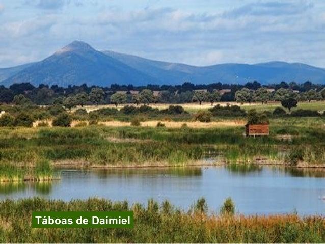 8. Timanfaya Illa Declarado Superficie Principais ecosistemas Outras formas de protección Lanzarote 1974 5.107 ha Volcánic...
