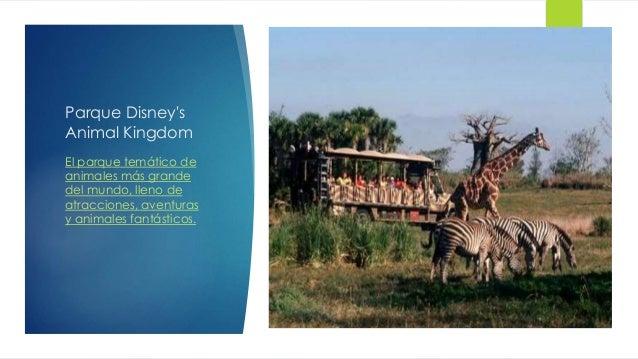 Parque Disney's Animal Kingdom El parque temático de animales más grande del mundo, lleno de atracciones, aventuras y anim...