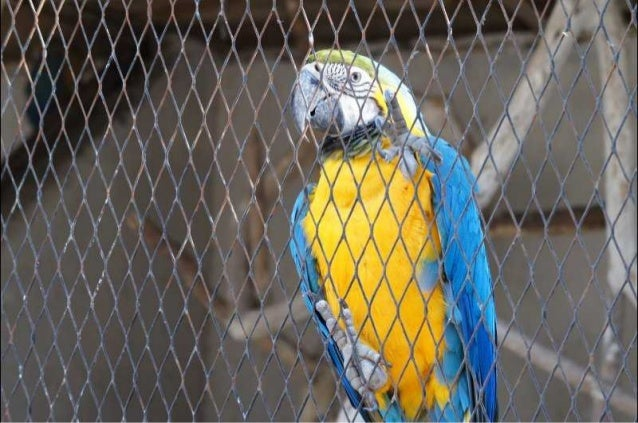The Egyptian Parrot