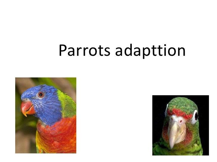 Parrots adapttion<br />
