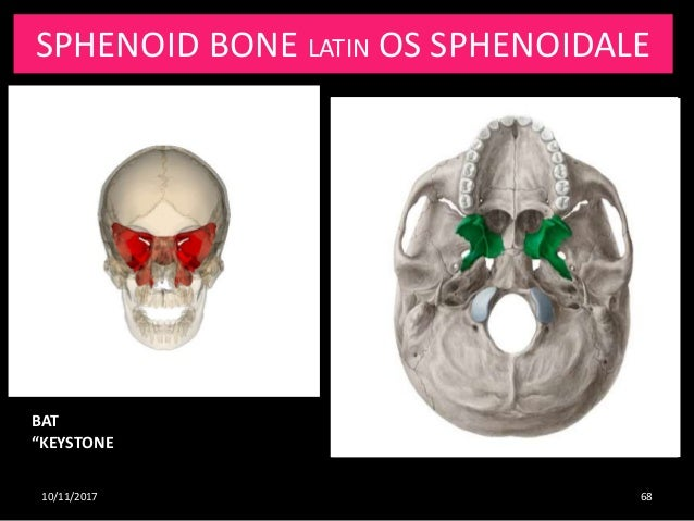 Osteology And Radiological Anatomy Of Skull And Cervical Bones Part Choose from 45 different sets of flashcards about synchondrosis on quizlet. skull and cervical bones
