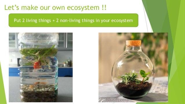 how do living things interact Science- unit 8- ecosystems how does the flow of energy affect the roles of organisms within an ecosystem how do living things interact with each other to form a system how will changes in the environment affect a community of organisms.