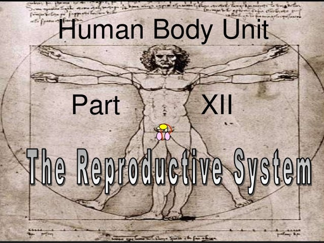 human reproductive system notes pdf