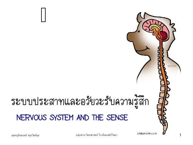 ระบบประสาทและอวัยวะรับความรู้สึก NERVOUS SYSTEM AND THE SENSE คุณครูธันยมลธ์ จตุรวิทย์กุล 1กลุ่มสาระวิทยาศาสตร์ โรงเรียนสต...