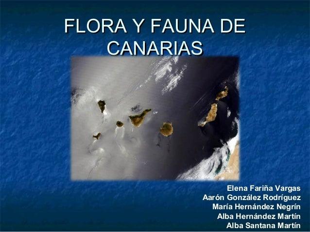 FLORA Y FAUNA DEFLORA Y FAUNA DE CANARIASCANARIAS Elena Fariña Vargas Aarón González Rodríguez María Hernández Negrín Alba...