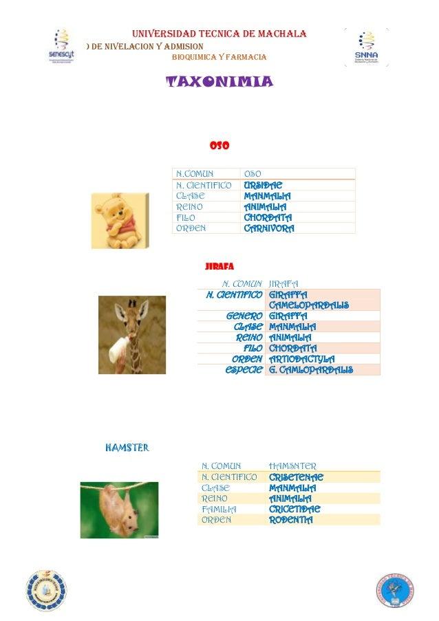 UNIVERSIDAD TECNICA DE MACHALA CURSO DE NIVELACION Y ADMISION BIOQUIMICA Y FARMACIA TAXONIMIA OSO JIRAFA HAMSTER N.COMUN O...