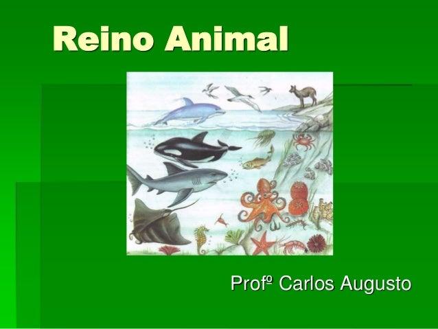 Reino Animal Profº Carlos Augusto