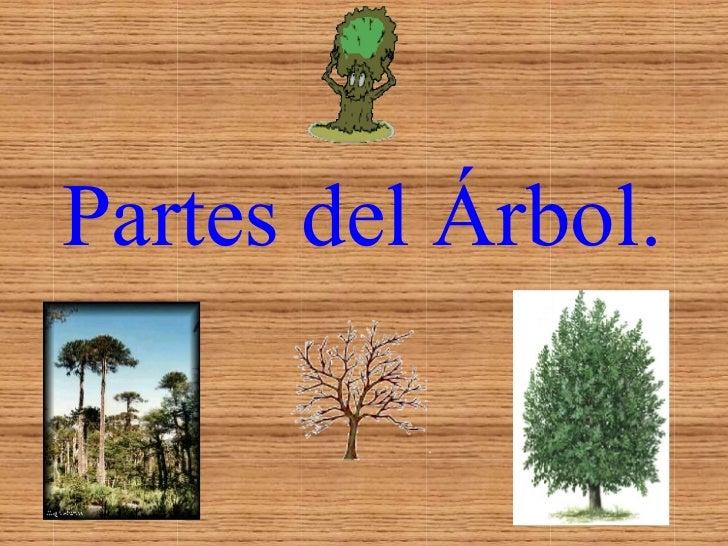 Partes del Árbol.