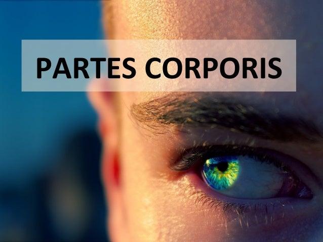 PARTES CORPORIS