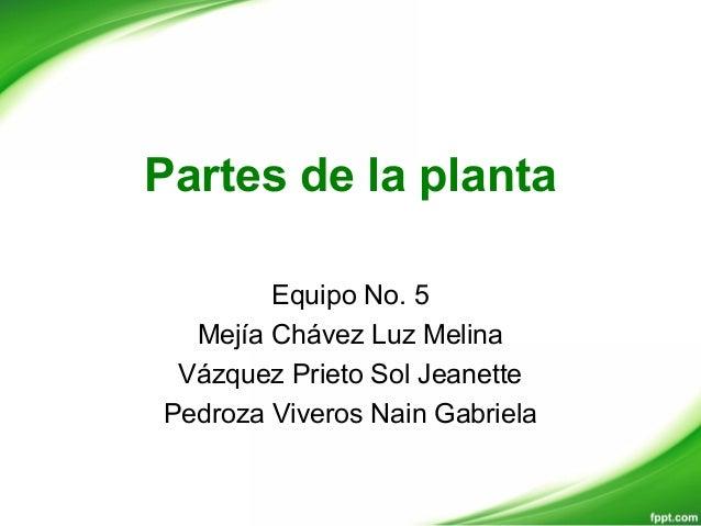 Partes de la plantaEquipo No. 5Mejía Chávez Luz MelinaVázquez Prieto Sol JeanettePedroza Viveros Nain Gabriela
