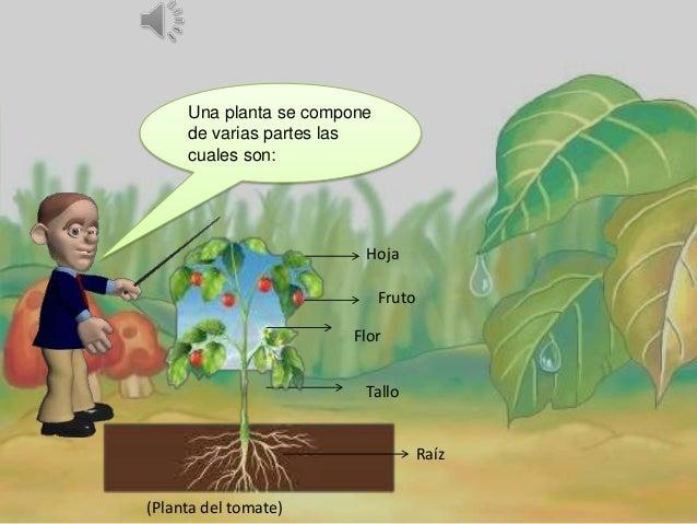 Partes de la planta explicaci n para ni os for Imagenes de las partes del arbol