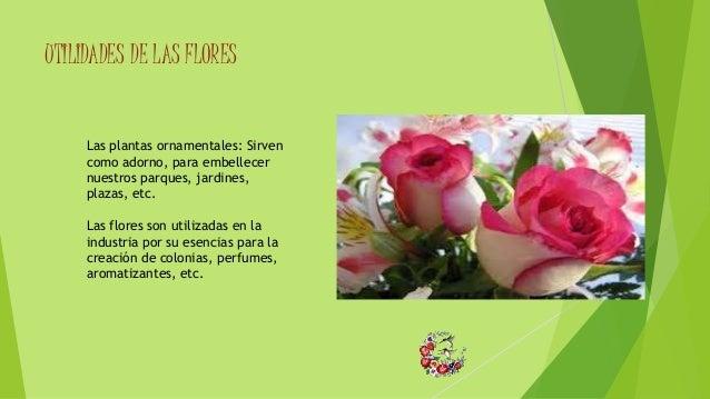 Partes de la planta for 5 nombres de plantas ornamentales