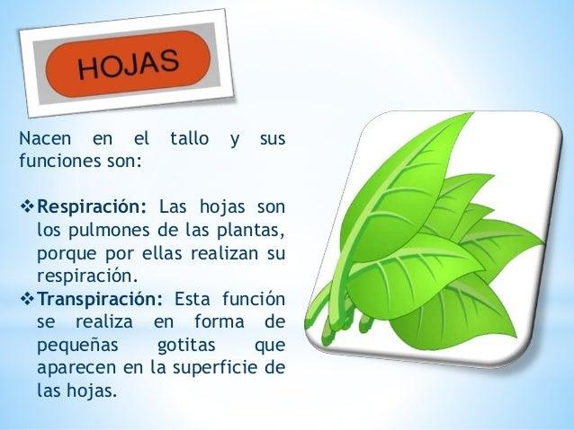 Es el órgano que sirve para la reproducción de las plantas. Las flores son las partes mas vistosas de plantas. La flor ...