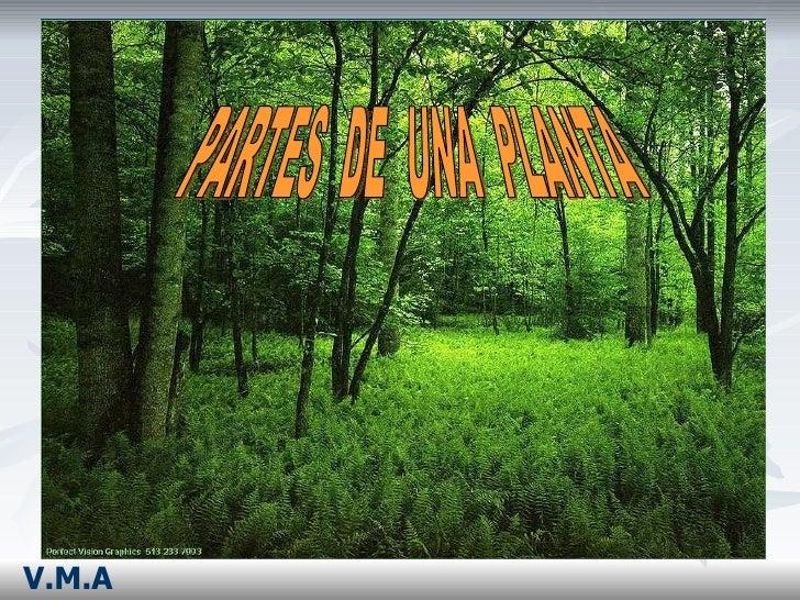 PARTES  DE  UNA  PLANTA V.M.A