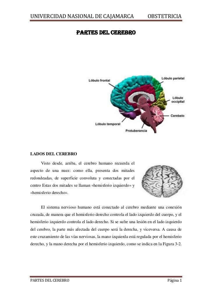 partes-del-cerebro-1-728.jpg?cb=1344461779