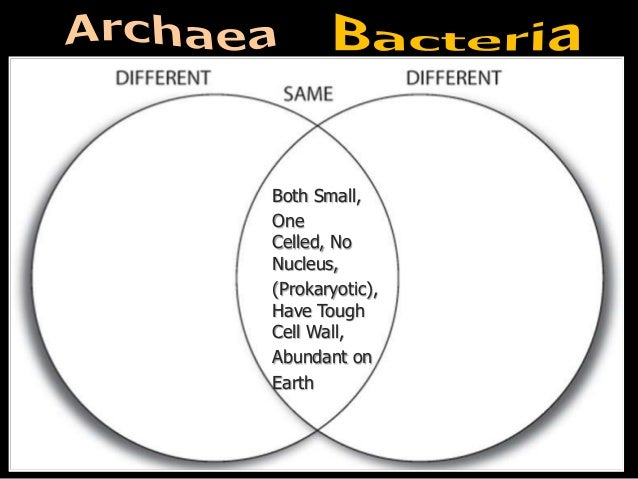Domain Bacteria and Domain Archaea PowerPoint