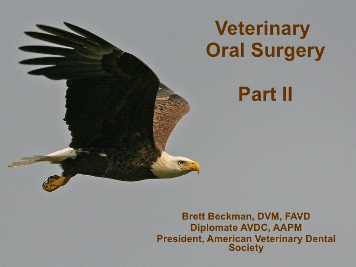Veterinary  Oral Surgery Part II Brett Beckman, DVM, FAVD Diplomate AVDC, AAPM President, American Veterinary Dental Society