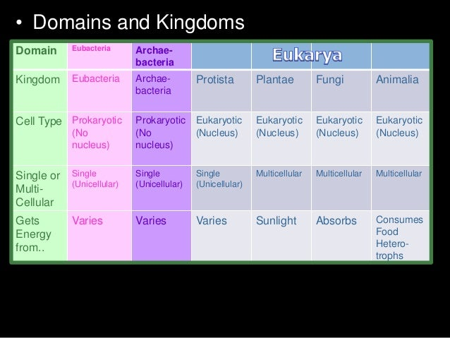 Image of: Mcqs Slideshare Kingdom Animalia Biology Lesson Powerpoint Taxonomy Animal Phylums