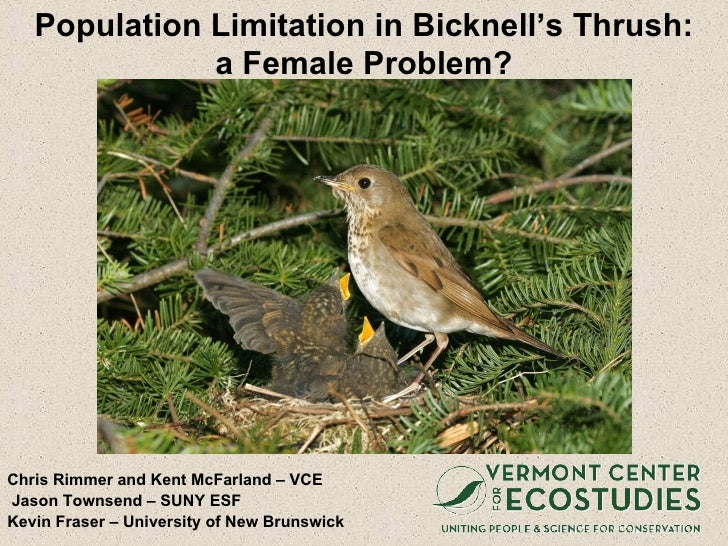 Population Limitation in Bicknell's Thrush: a Female Problem? <ul><li>Chris Rimmer and Kent McFarland – VCE </li></ul><ul>...