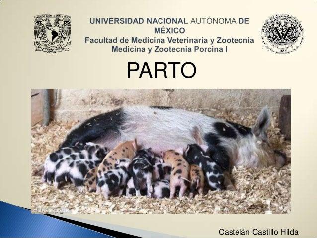 PARTO  Castelán Castillo Hilda