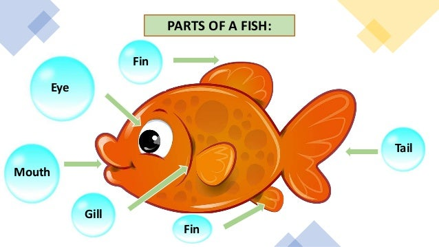 PARTS OF A FISH: Eye Mouth Fin Fin Gill Tail