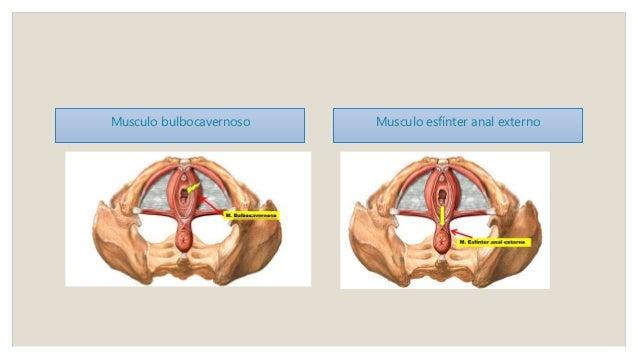 Parto (fisiología y anatomía)