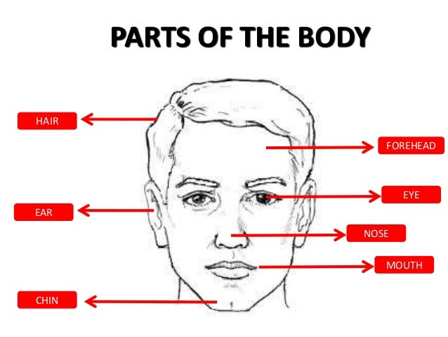 Parts of-the-body Slide 3