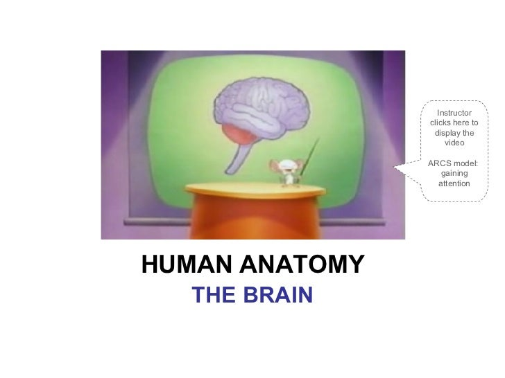 HUMAN ANATOMY THE BRAIN Instructor clicks here to display the video ARCS model:  gaining attention