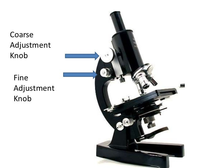 Parts and functions of a compound microscope coarseadjustmentknobfineadjustmentknob 14 ccuart Gallery