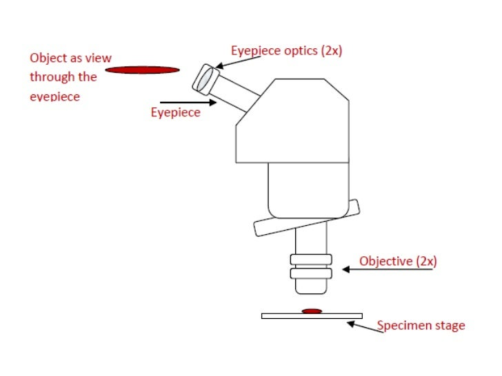 Parts and functions of a compound microscope 37 ccuart Images