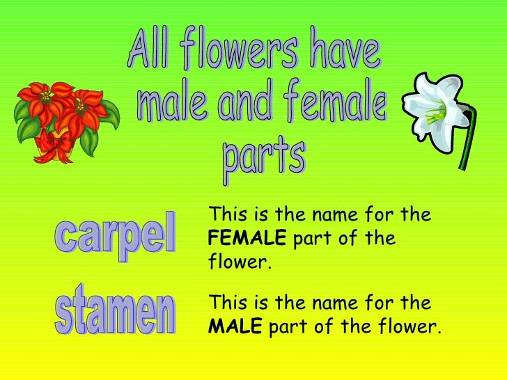 all flowers images with names. flower names for dogs all about, Beautiful flower