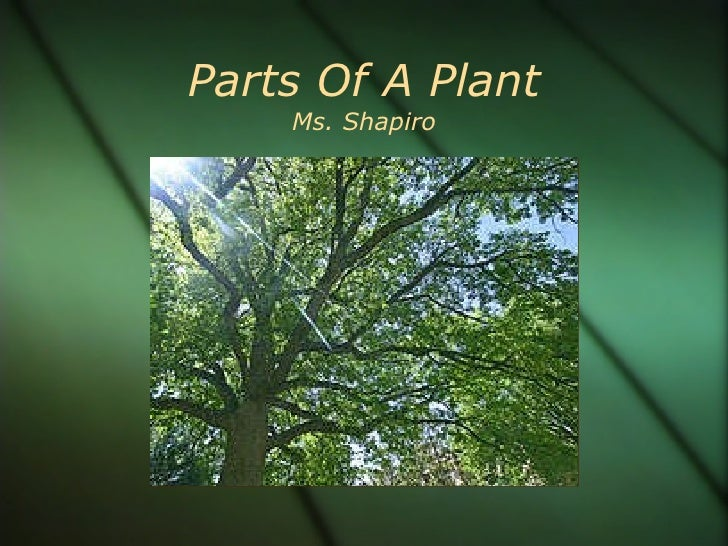 Parts Of A Plant Ms. Shapiro