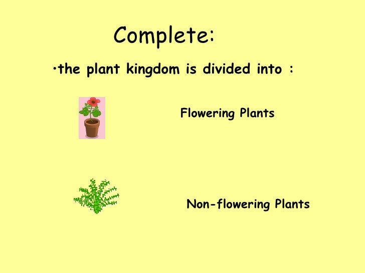 Image result for plants year 5