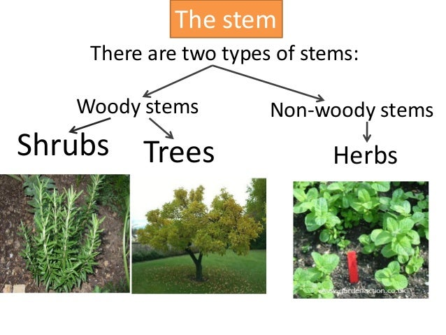 difference between plant herb shrub and bush