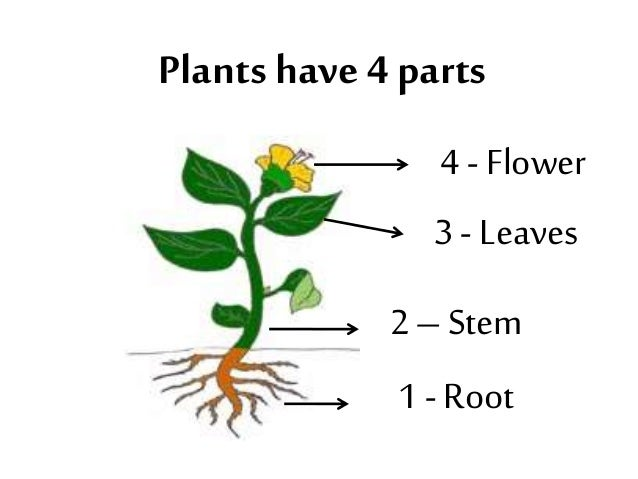 parts of the flower This article explains your question exactly how i would so here you go how  seeds are formed.