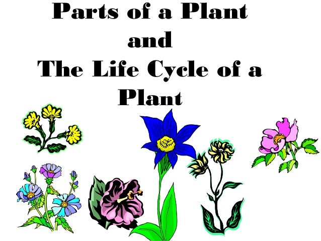 Parts of a Plant and The Life Cycle of a Plant