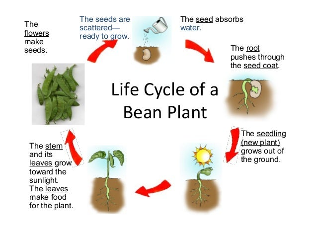 Science - Plants and Seeds - Elementary Library ...